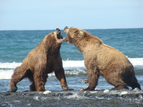 bear_fight_1.jpg