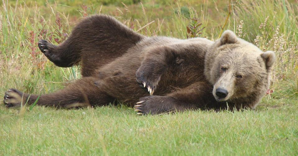 bear_view.jpg